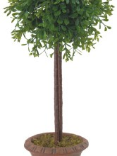 16″ Boxwood Topiary