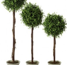 Boxwood Topiary set of 3