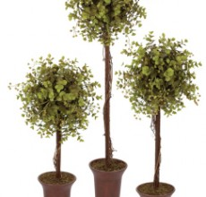 Eucalyptus Topiary set of 3
